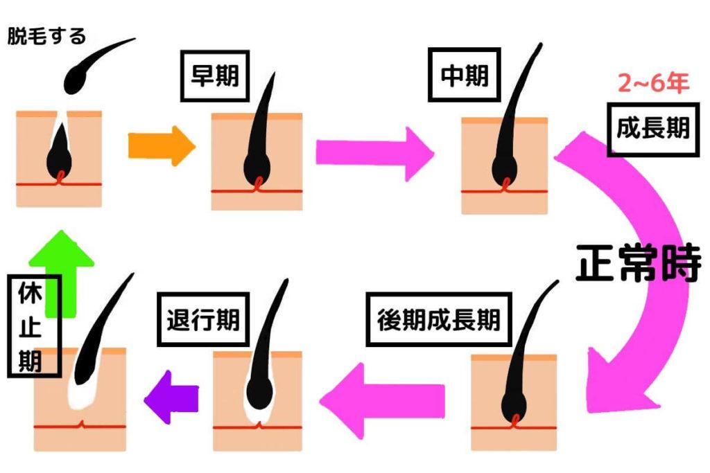 普通のヘアサイクル