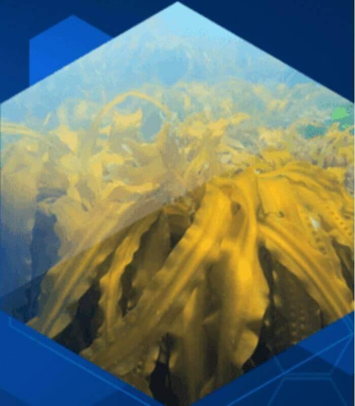 高品質の海藻エキス「ガニアシ」配合