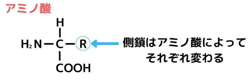 アミノ酸を構造によって分類